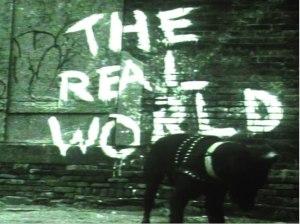 RealWorldDog
